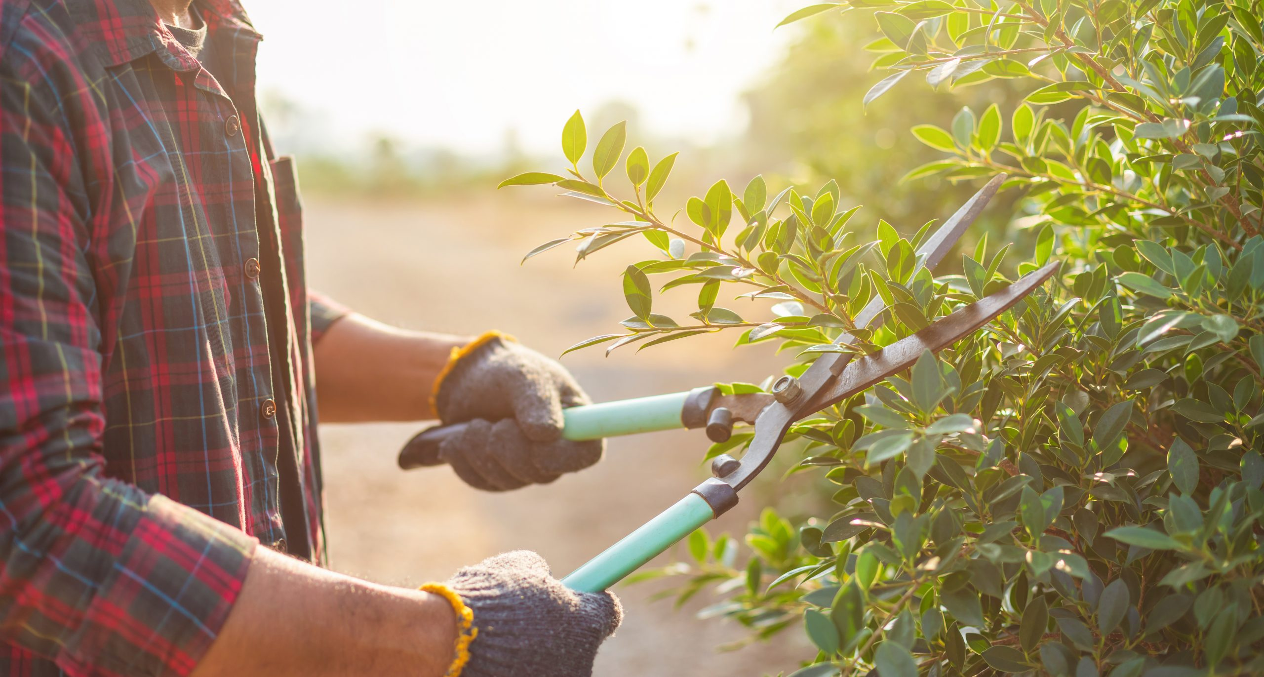 Sprucing Up Your Garden For Spring